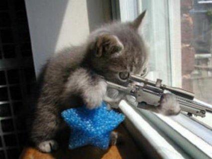 minaccia, cecchino, cecchina, sparare, esperto, mirare, fuoco, strage, cani, taglia, abbondante, cattura, tiratore scelto