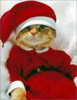 gatto, cartoline natale, costume, festa, babbo natale, travestimento, travestito, micetto, cucciolo, cappellino natale