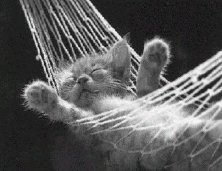 cartolina gatto, amaca, cartoline riposo, divertente, cartoline dolce riposo, cartoline relax