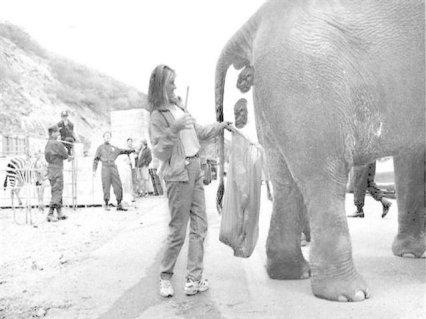 elefante, cacca, divertente, lavoro infame, pazza