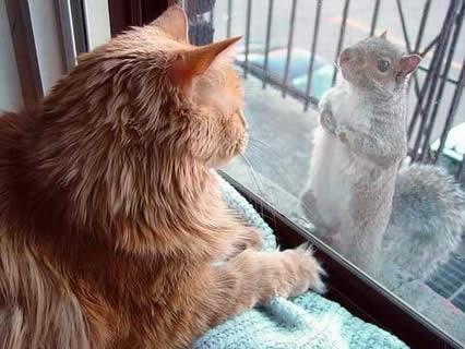 gatto, topo, caccia al topo, buffa, scoiattolo