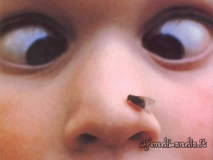 bambino, mosca, naso, nasino, occhioni, sguardo