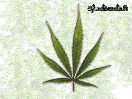 pianta, no alla droga, male, salute, stato, confusionale, malattie, eccesso, fumare, canna, debolezza