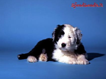 cane, cucciolo, tenero, tenerezza, bianco e nero