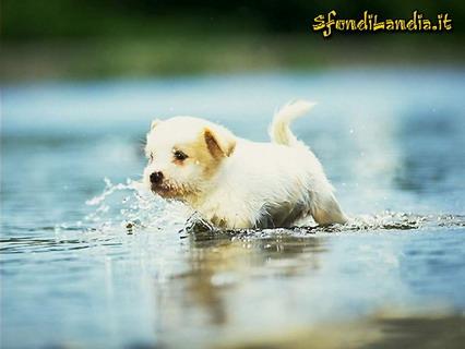 cucciolo, acqua, fiume, cane