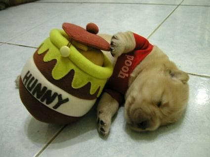 sonno, dormitina, stanchezza, duro, lavoro, hunny, musetto, zampone, orecchie, barattolo, rosso, colore, giallo, tappo