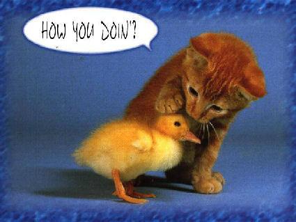 gatti, pulcino, giallo, canarino, piccolo, tenerezza, affetto, pace, specie, contesa, contrasto, come stai, domanda