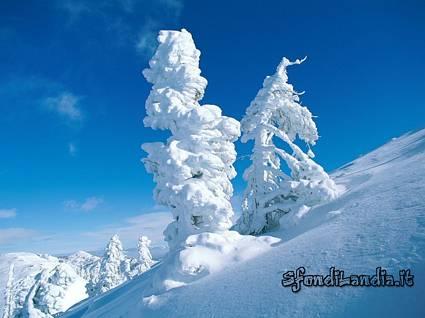 zero, gradi, trasformazione, neve, esagono, sciogliersi, sciare, alberi, bianche, richiamo, sportivi, attrazione, diverso, affascinare, bambini