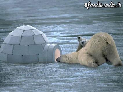 ghiaccio, igloo, orso, pelo, caldo, curiosare, vedere, guardare