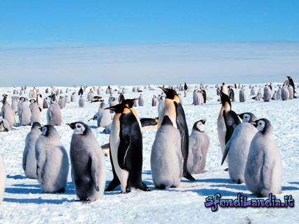 pinguini, ghiaccio, polo nord, freddo, inverno