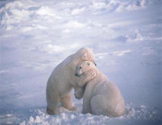 cartoline consolazione, ghiaccio, paesaggio, polare, tenerezza, sentimenti, bonta, candido