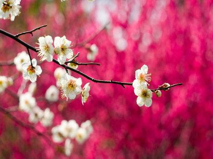 fiorire, risveglio, forza, impeto, energia, sole, acqua