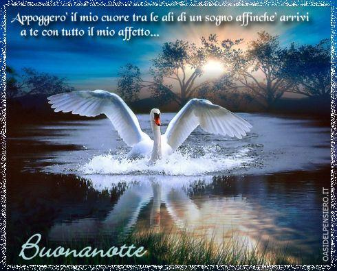 affetto, sentimento, volare, distanza, raggiungere
