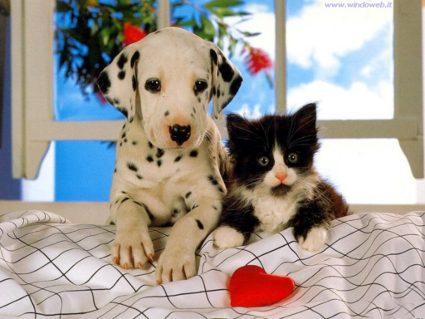 amore, animali, cane, gatto, affetto, bianco e nero, dalmata, bellezza