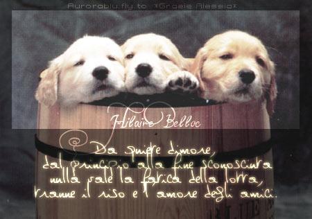 cartoline amici, lottare, sorriso, amici, giusto, felicità , affetto, invio, immagine, desktop cani, sfondo, logo cani, botte