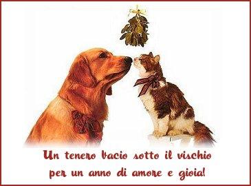 amore, pace, gatti, cani, lotta, scontro, preda, cacciatore
