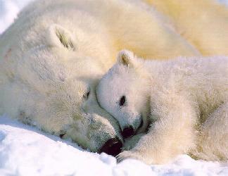 cartoline mamma orsa, piccoletto, cucciolo, cuccioletto, sicurezza, grandezza, cartolina protezione