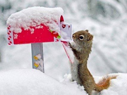 natale, amore, scoiattolo, roditore, auspici, neve, freddo, vigilia