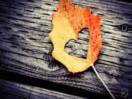 amore, battito, cuore, passione, love, autunno, foglie