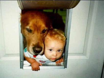 cartoline cuccioli, testa cagnolino, cane, viso piccolo, bebe, simpatia