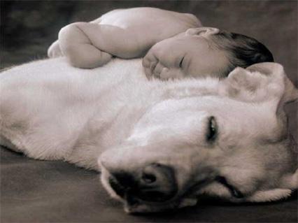 Sonnellino,,riposino, bambino, cane, tenerezza, tenera, animali, bambini, neonati, neonato, affetto, amore