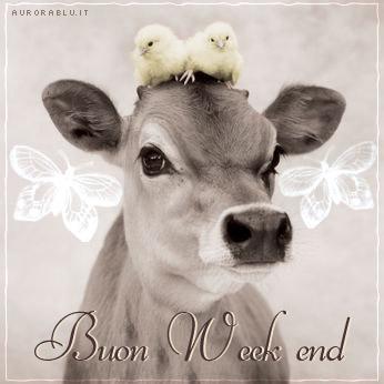 cartoline buon weekend, gine settimana nella natura, prato, animali mucche pulcini, relax campagna, cartoline riposo