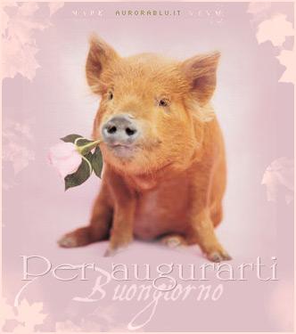 Invia buongiorno augurio come cartolina su facebook e whatsapp for Immagini del buongiorno bellissime