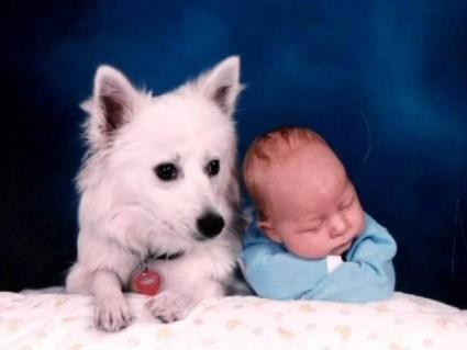 cane, bimbo, cucciolo, cagnolino, serio, guardare, stessa, parte, sonnellino, dormita, vigilare, tranquillità, serenità, furbizia