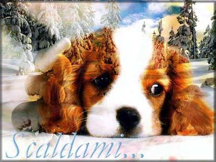 cani, nevi, cucciolo, scaldare, freddo, temperature, alte, basse, bosco, nevicata, nevicare, cold, snow, termometro, calore umano, animale