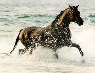 cavallo, bagno, nuotata, doccia, schiuma, spuma, risacca, bagnasciuga, caldo, acqua, mare, sale