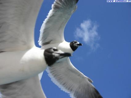 volare, fiducia, salto, vuoto, libero, percorso, meta