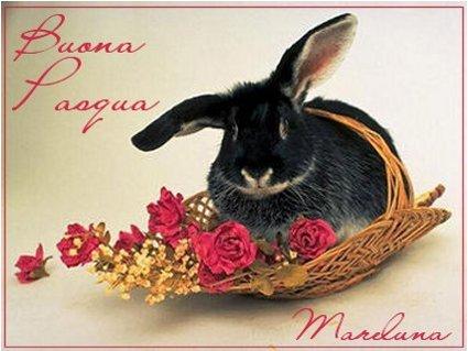 coniglio, pasquale, cesto, uova, rinascita, benevolenza, docile, buono, tenero