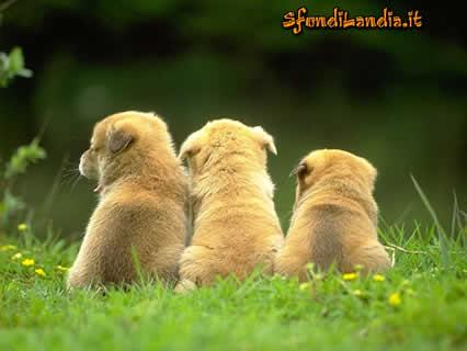 cuccioli, amici, amicizia, canetti, cani, batuffoli, prato