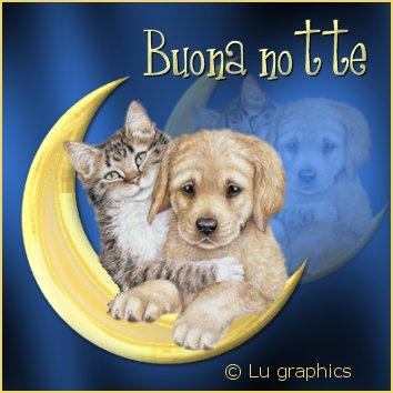 augurare buona notte, cartoline luna, teneri, gatto, cane, insieme, sguardo, dolce amore, sentimento, profondo