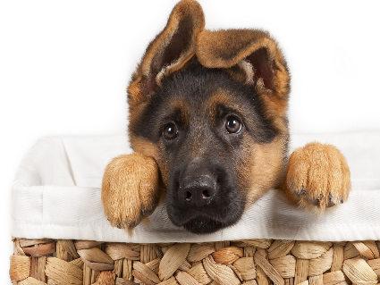 affetto, cane, sincero, coccolarsi, cercare, curioso, triste