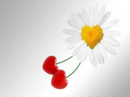 amore, sentimenti, petali, corolla, cuore, passione, dolcezza