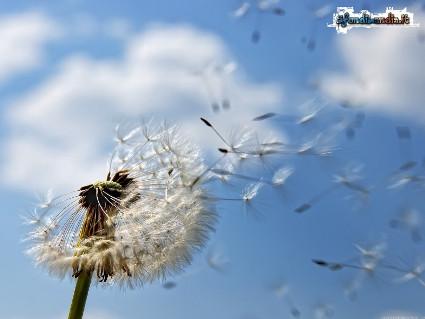 stelo, polline, corolla, vento, impollinazione