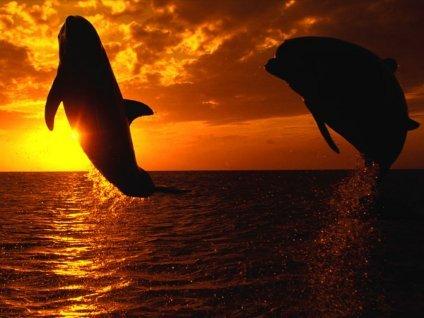 discoteca, mare, spensieratezza, libertà, free, sfondo, tramonto, immagine, foto