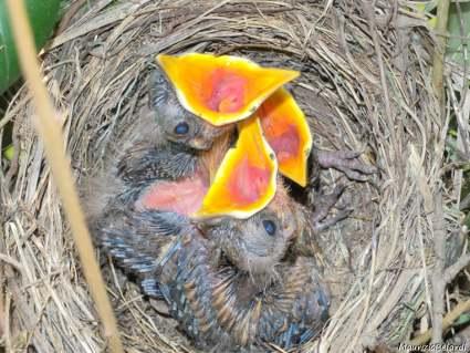 desideri, passera, beccucci, mangiare, fame, cibo, uccellini