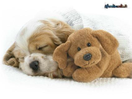 peluche, pezza, bambola, orsetto, dormire, amico, cullare, forza, sicurezza