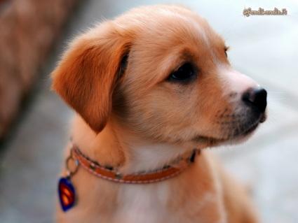 cane, cucciolo, affetto, dolce
