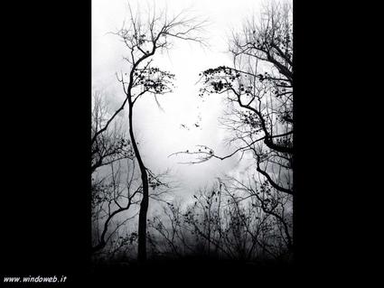 illusioni ottiche, donna, rani, occhi, uccelli, secco