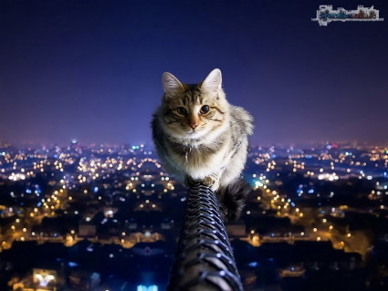 paura, felino, cadere, felpato