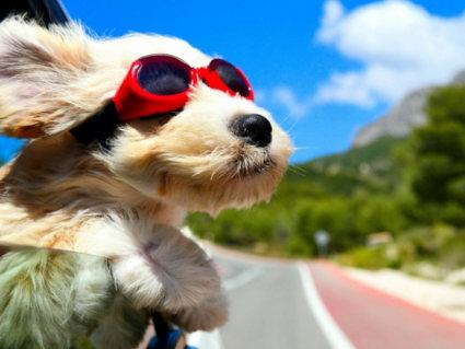 attrazione, amore, affetto, rimorchiare, occhiali da sole