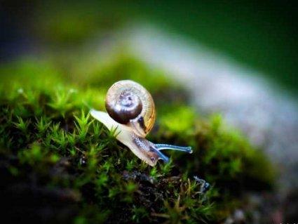 lumaca, lentezza. relax, riposo, frenesia, riflessione, tempo, calma