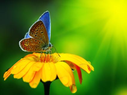 fiori, farfalle, polline, spore, cibarsi, sapori