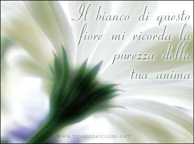 bianco, candido, candore, fiore, luminosità, puro, ricordare, somigliare