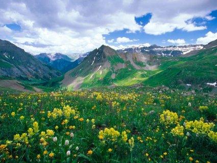 monti, pascolare, malghe, clima, rigido, adatto, piante, piccole, arbusti, piccoli, steli, corolla