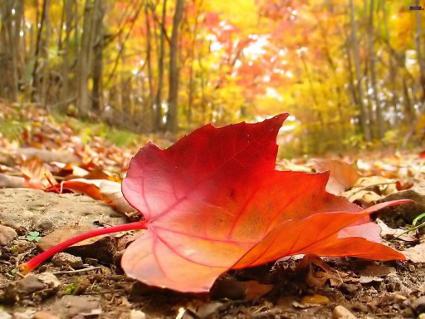 foglie secche, strade, alberi spogli, freddo, pioggia, sopire