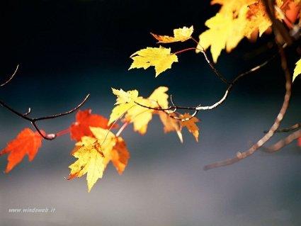 foglie, secco, rami, cadere, morte, letargo, sopire, calore, secco